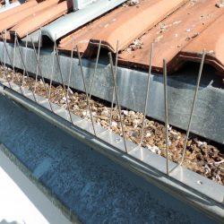 Taubenabwehr & Dachrinnenreinigung